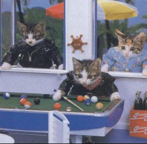 poolcat.jpg