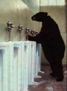 bear_break.jpg