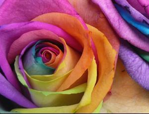 rainbow_0004.jpg