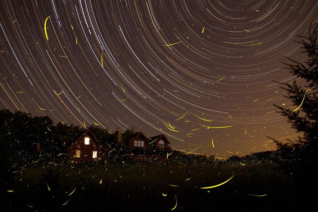 FirefliesStartrails.jpg