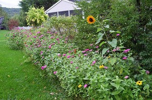 amandas-wildflower-garden-22.jpg