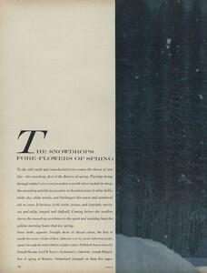 Snowdrops_Avedon_US_Vogue_March_15th_1966_01.thumb.jpg.d23e8befa4d56936a38ed41049c129a3.jpg