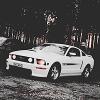 White_Mustang